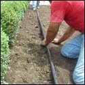 edgings-lawn-installation-7-e141c260[1]